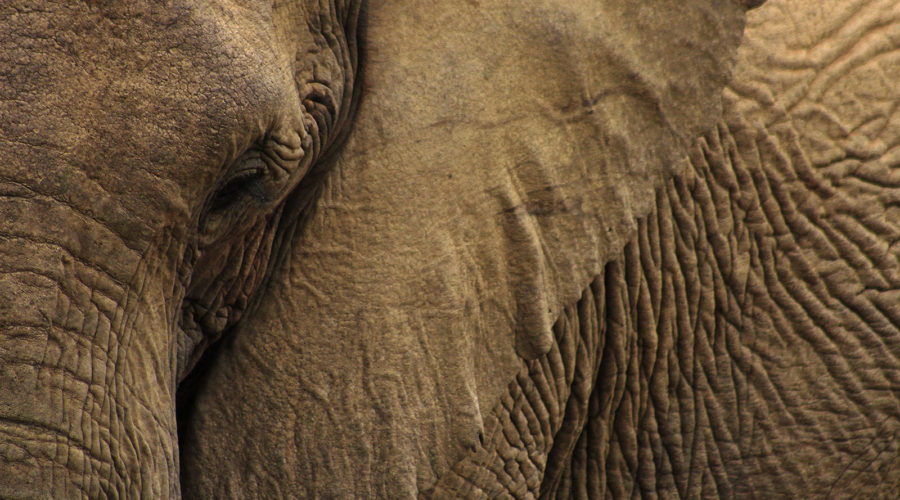 Discover Living With African Elephants